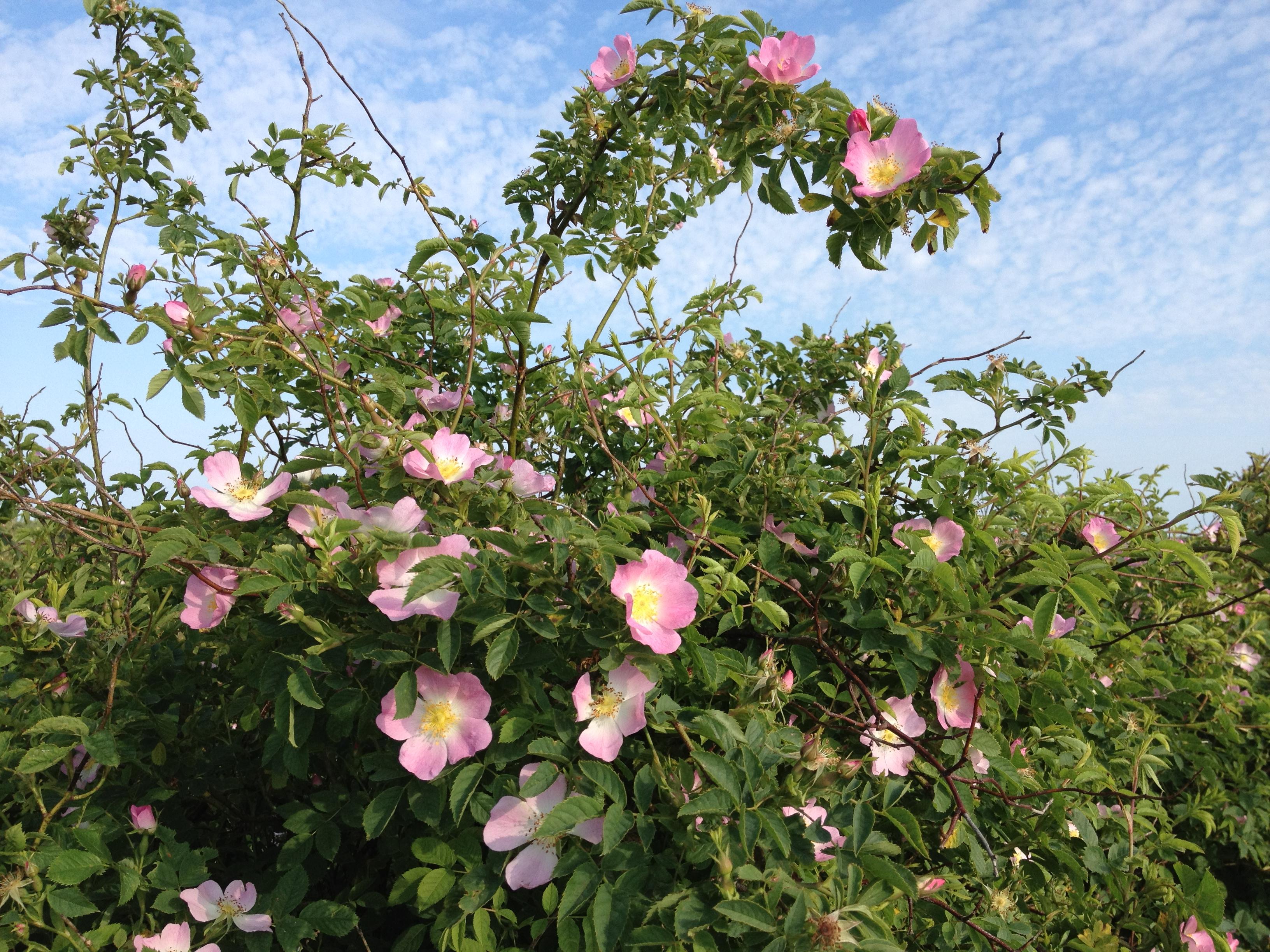 blomster_01