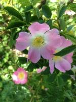 blomster_03