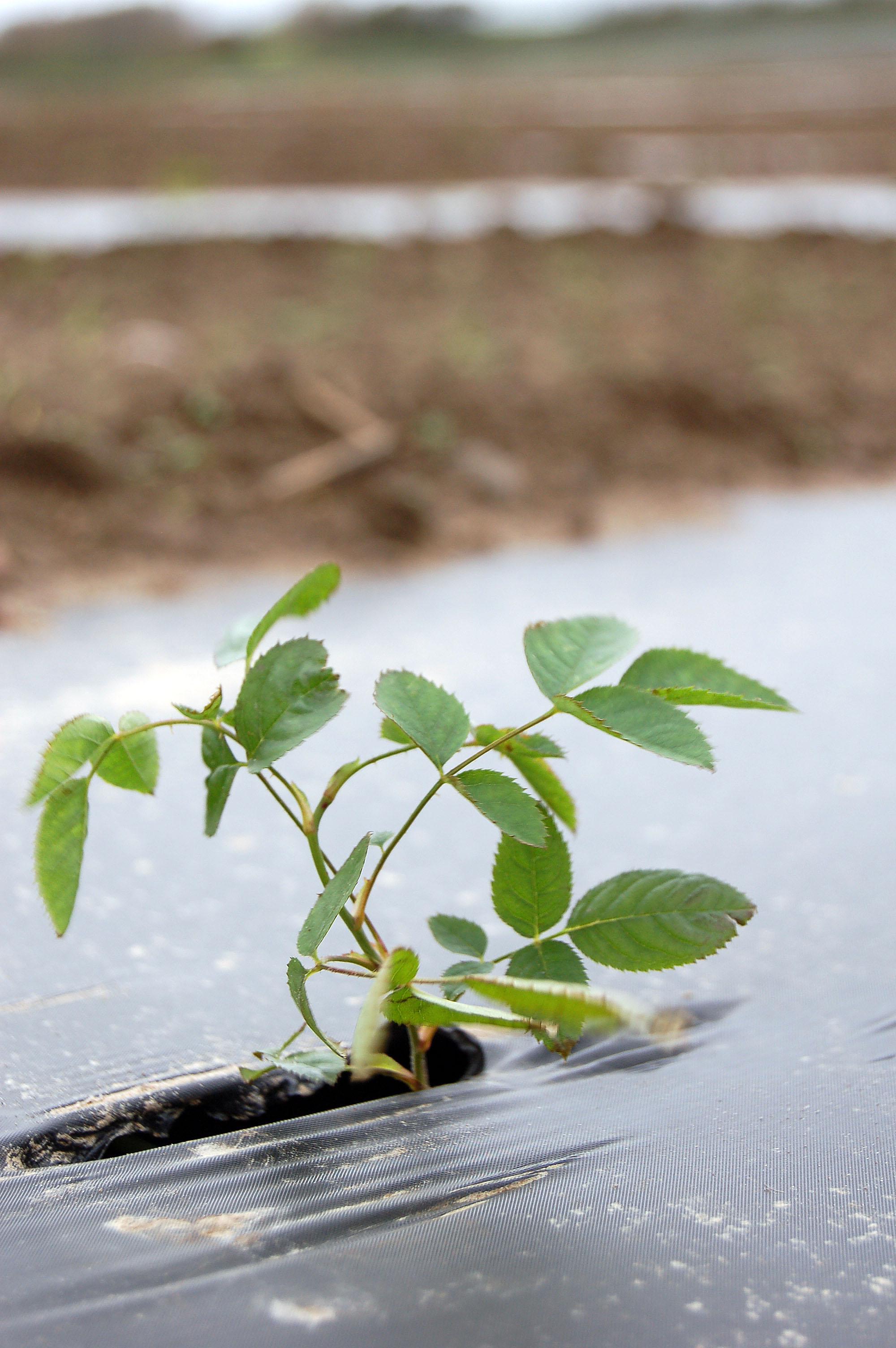 plantning_00